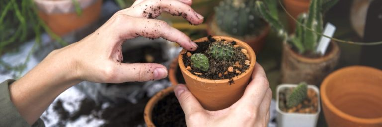 Sklep ogrodniczy w Internecie – od czego zacząć i jak osiągnąć sukces?