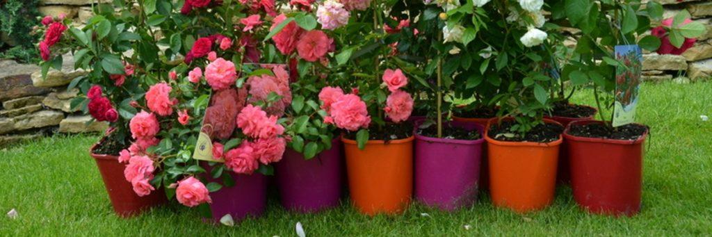 E-Clematis to #MistrzowieeCommerce – jak sprzedawać rośliny przez Internet?