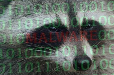 Oprogramowanie Raccoon szybko infekuje urządzenia na całym świecie