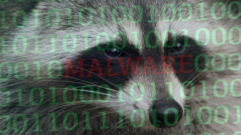 Malware Raccoon: Szop pracz infiltruje urządzenia i wykrada z nich dane