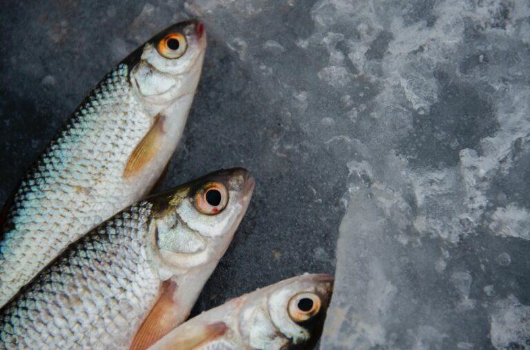 Odpowiadamy na pytania z webinaru – Nie bądź rybą! Nie łykaj wszystkiego i nie daj się złapać! #securitycooking