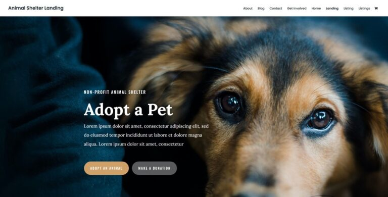 Polecane motywy DIVI dla WordPressa – strony dla instytucji publicznych i fundacji